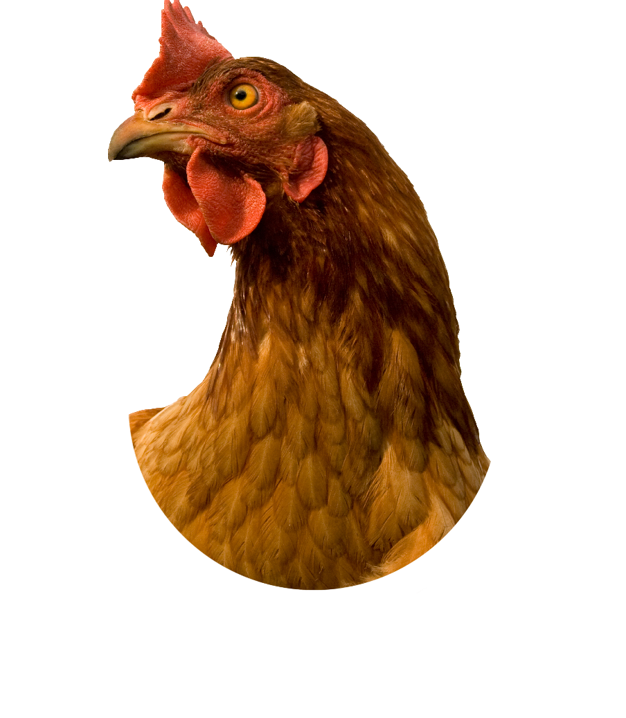 Random Gloria Decides If Atlanta Gets Chicken Fries 1pm