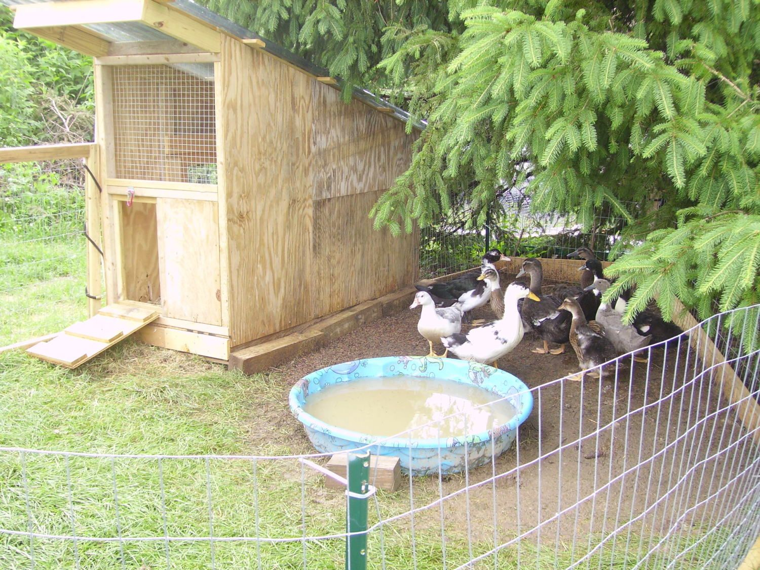 Scrap duck hut backyard chickens community for Building a duck house shelter