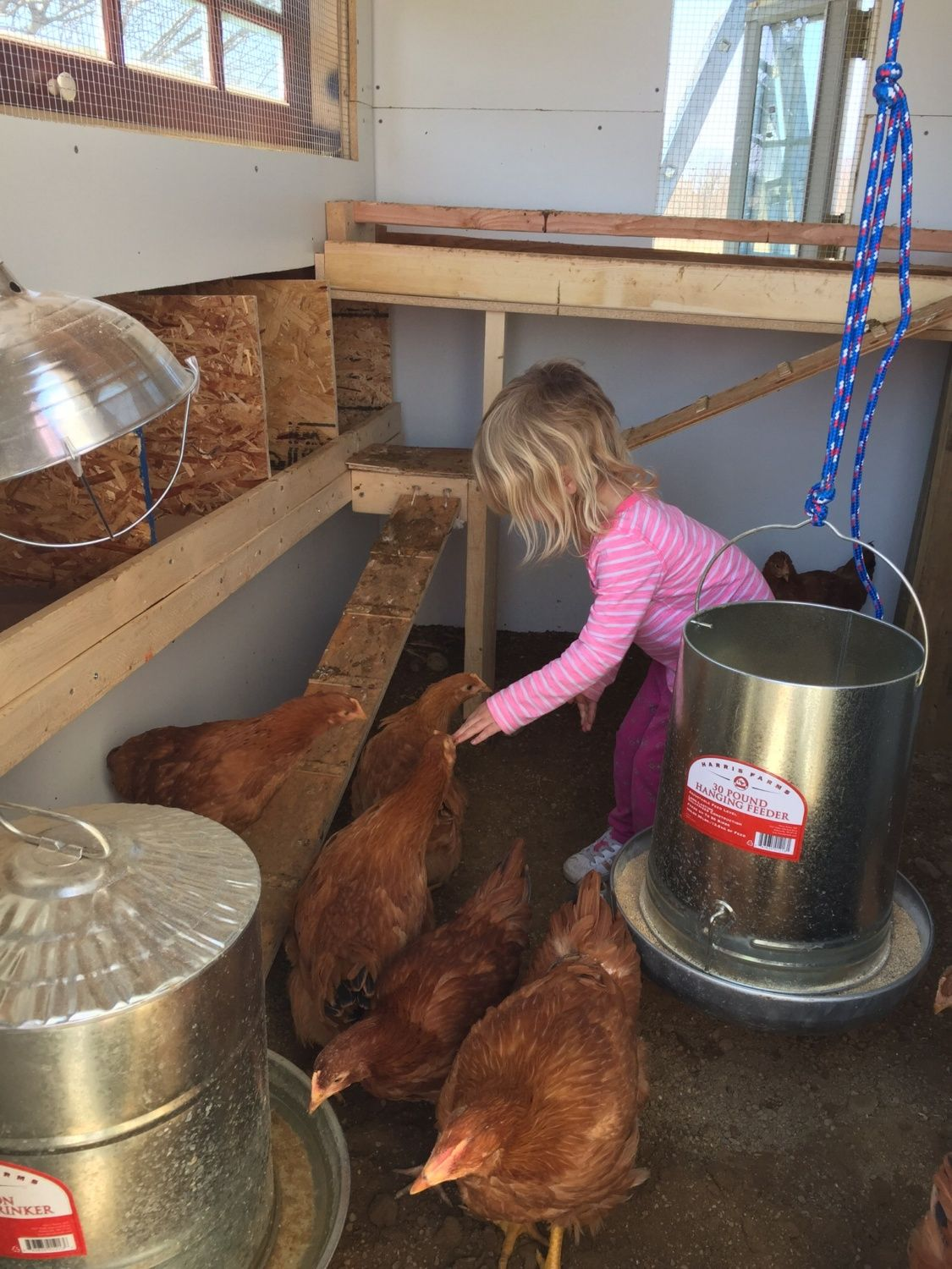 Our little four year old trying to tell the chickens what to do.