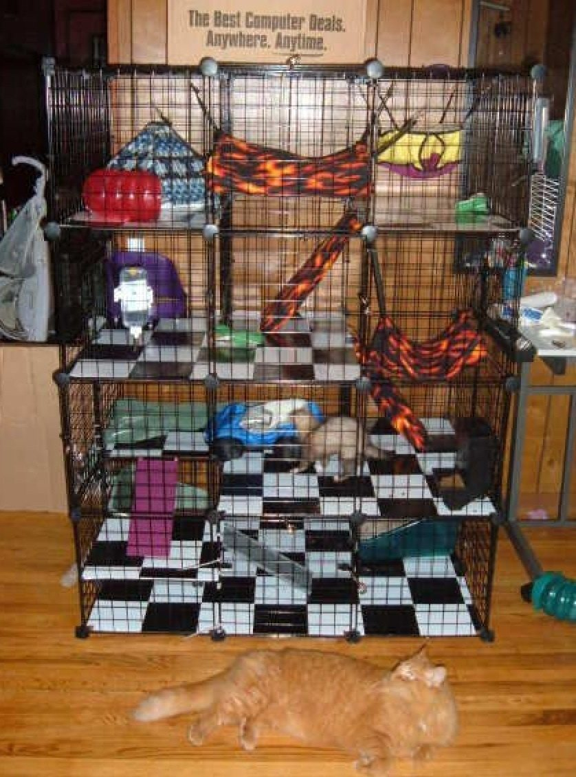 Ferret cages living room series deluxe ferret cage for How to make a cheap guinea pig cage