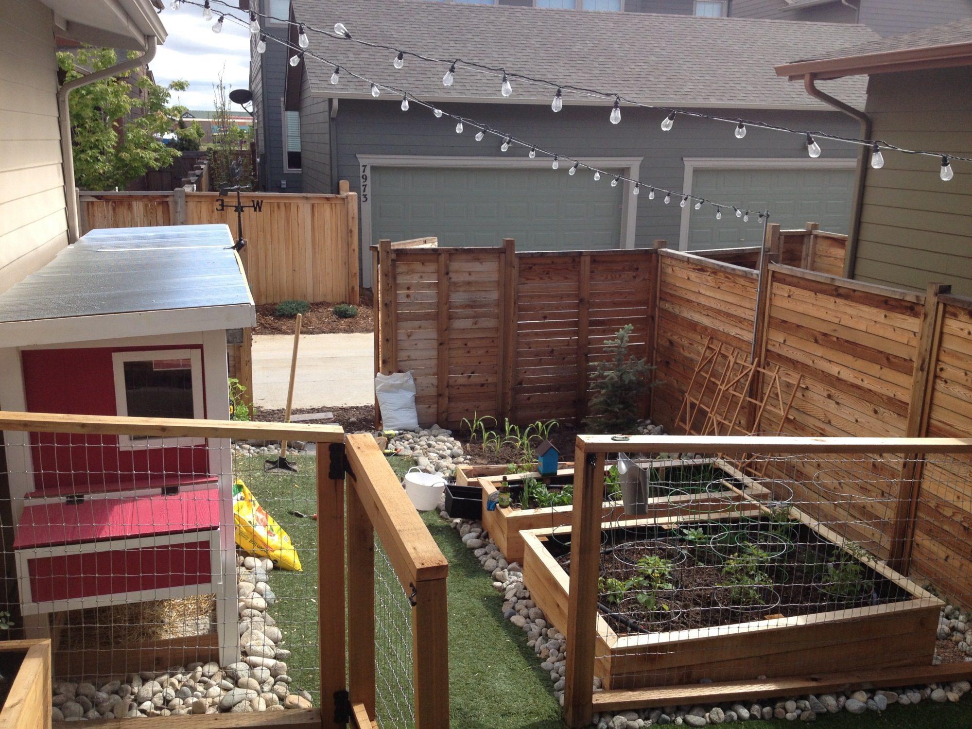 jurassic bawk coop on barfield urban farm backyard chickens