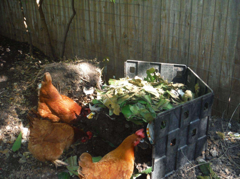 composting u0026 granulated fertilizer question backyard chickens