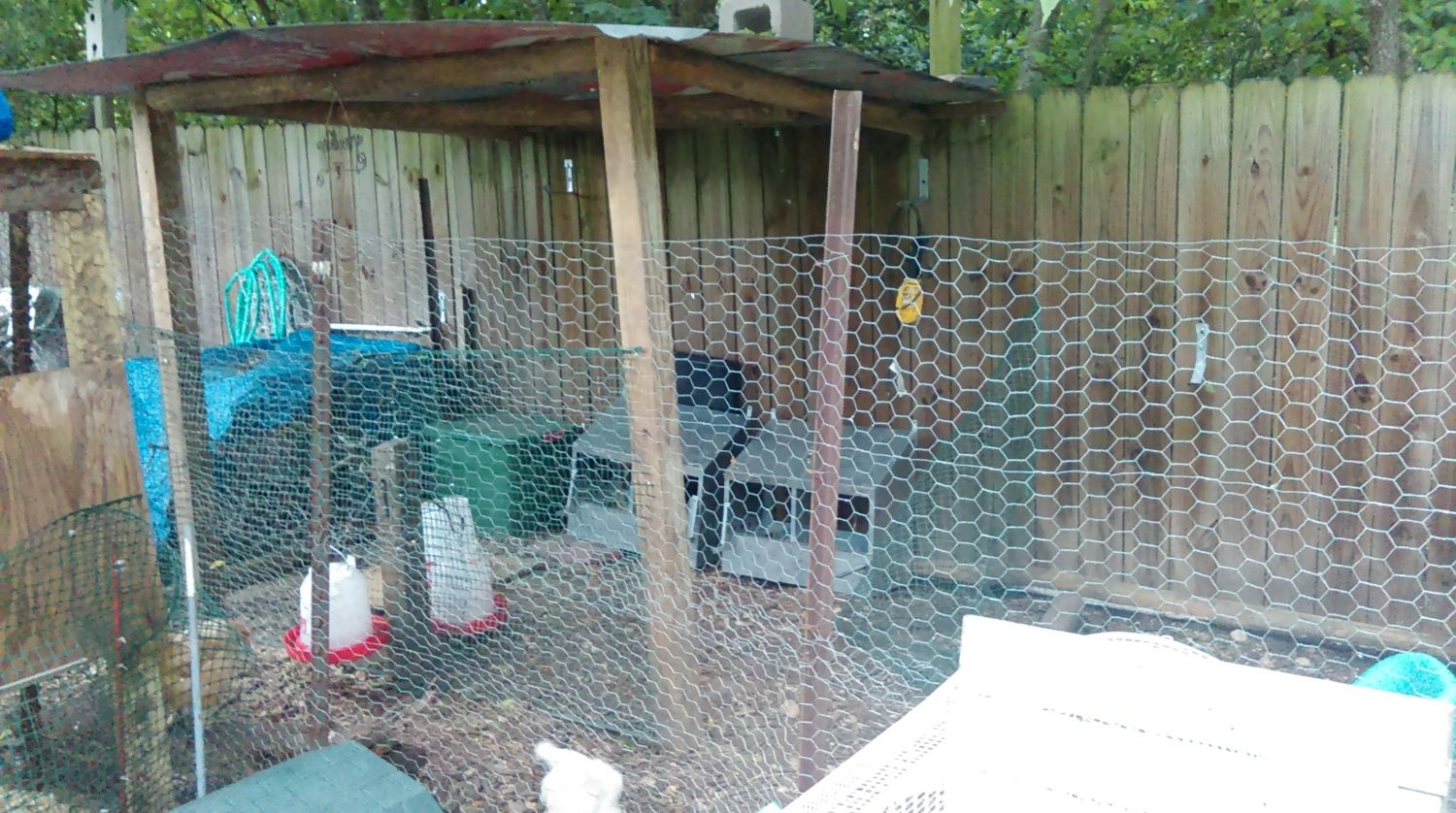 Problems with Possums   BackYard Chickens