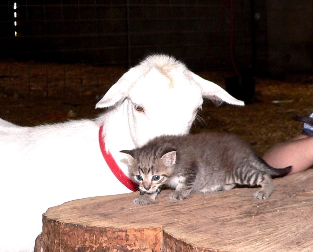 Barn Cats and Kitttens Please help......!! | BackYard ...