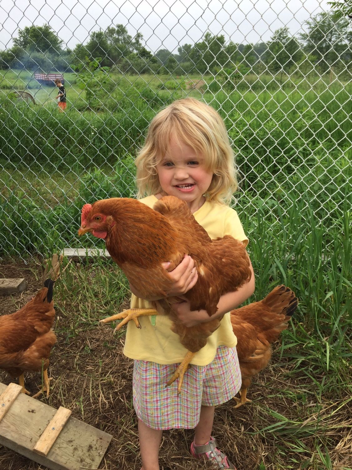 Our little girl loves to pick up the chickens and hug them. They don't seem to mind.