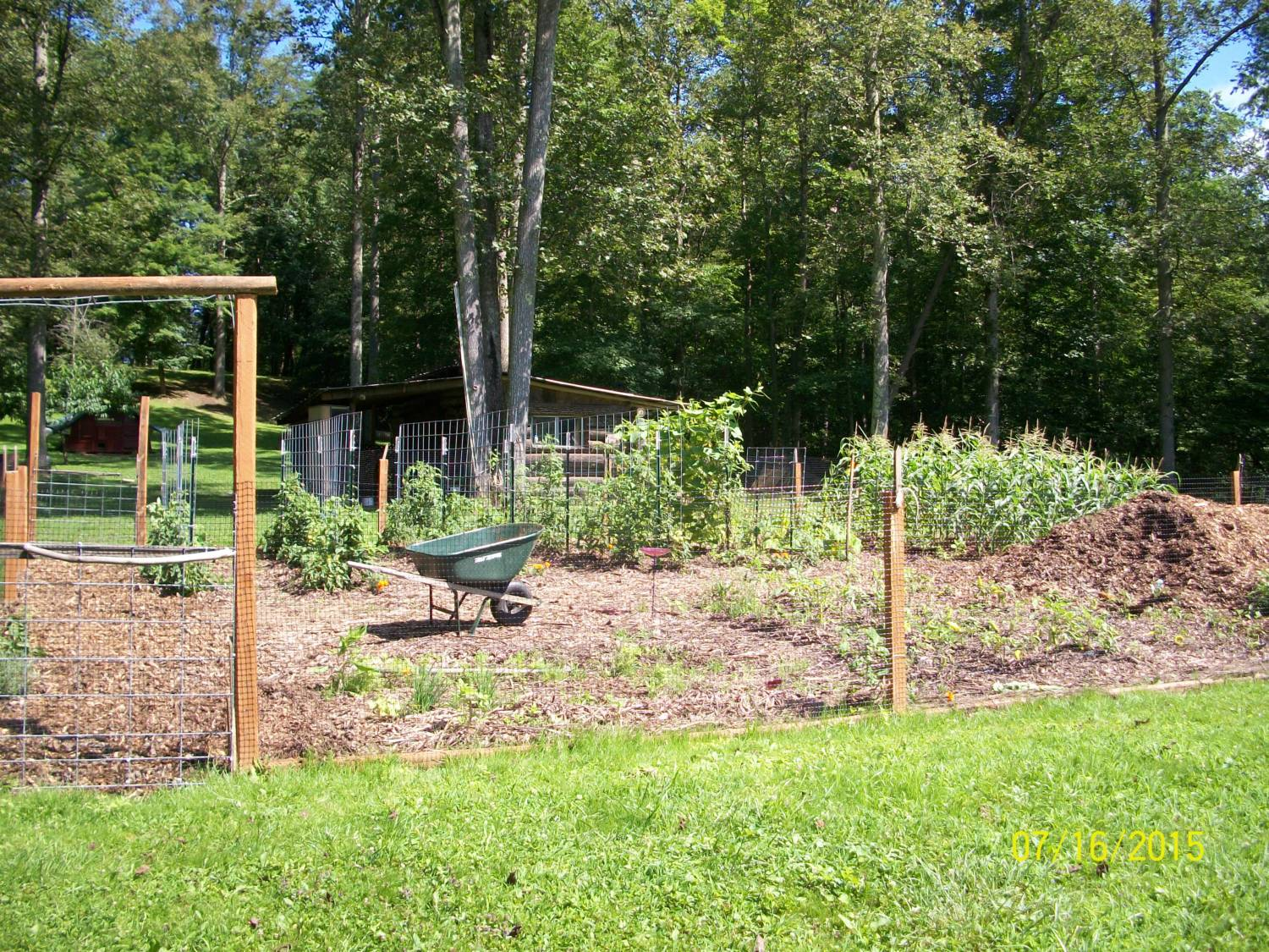 How Do You Keep Your Freerange Chickens Out Of Raised Bed Gardens