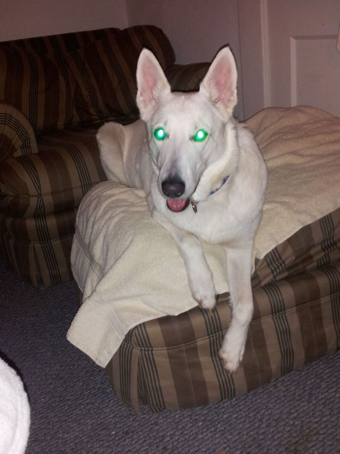 "This is Millee, my 8 year old white German Shepherd. I have had her for a little over 2 years. She isn't much of a farm dog, she doesn't ""shepherd"" anything anywhere! But she loves the kids, and is very protective of the house, especially when the kids are home."