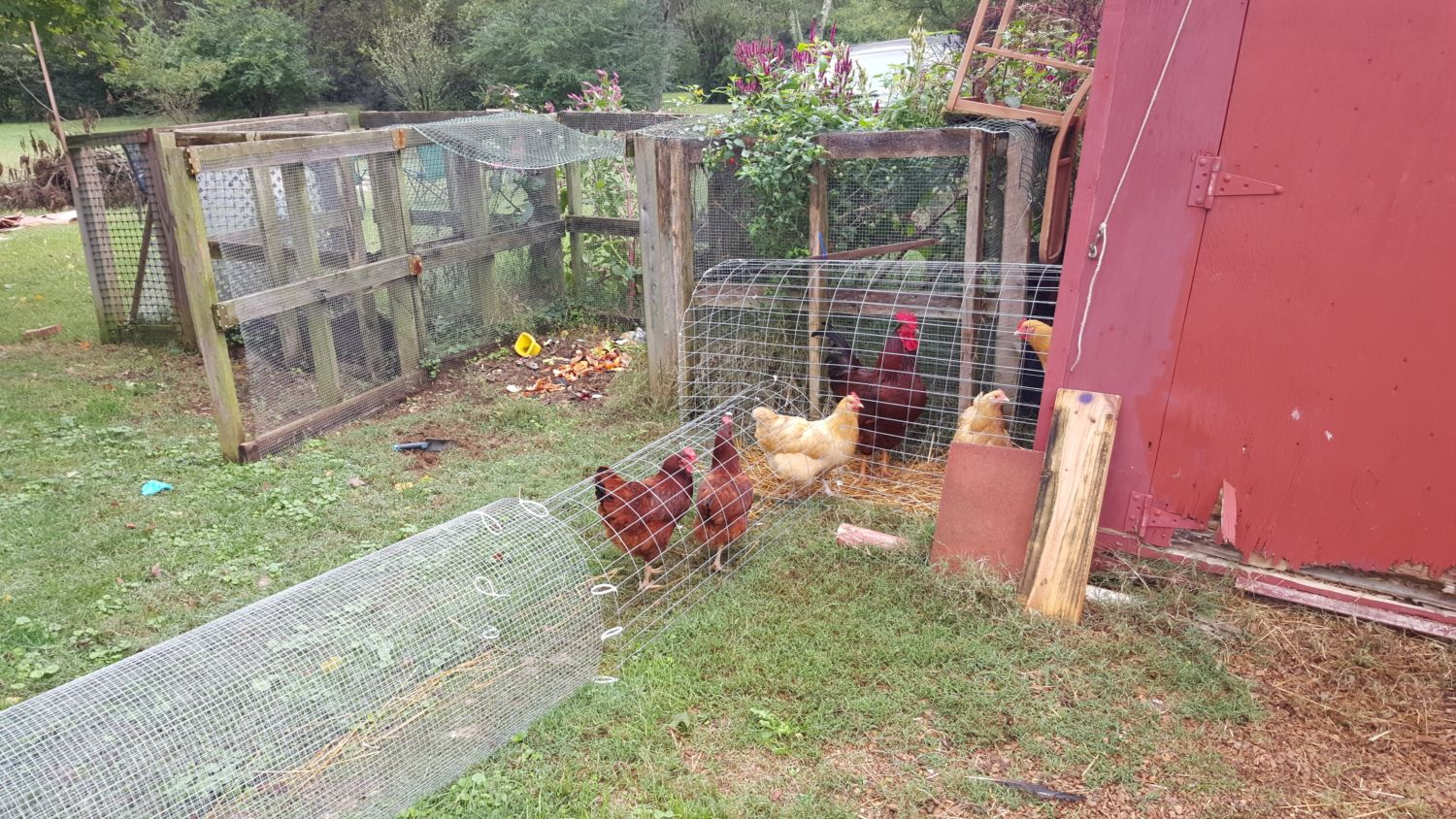 the atf chicken dome creating an easily movable run enclosure