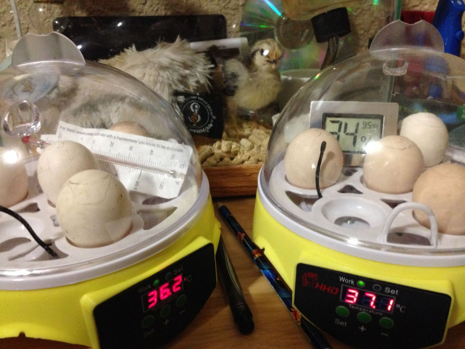 Third attempt with a new incubator.Set for the Halloween Hatch-a-long on Oct 11, 2015