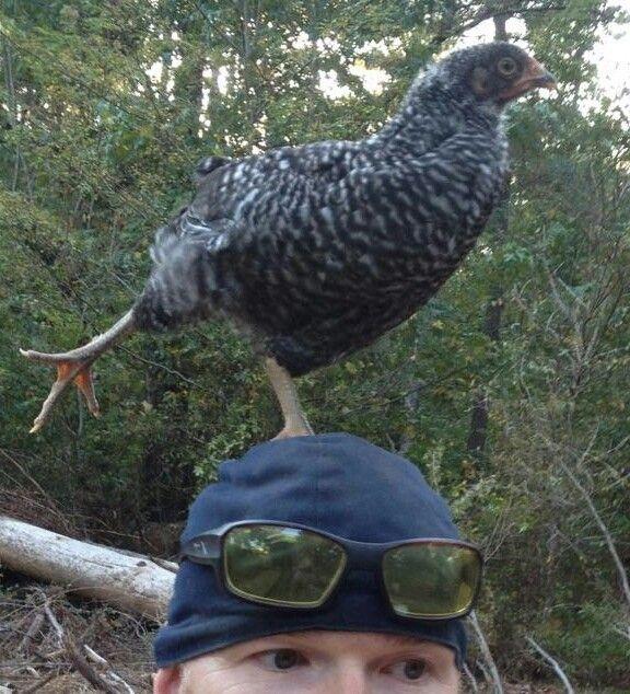 chicken yoga.... on my head
