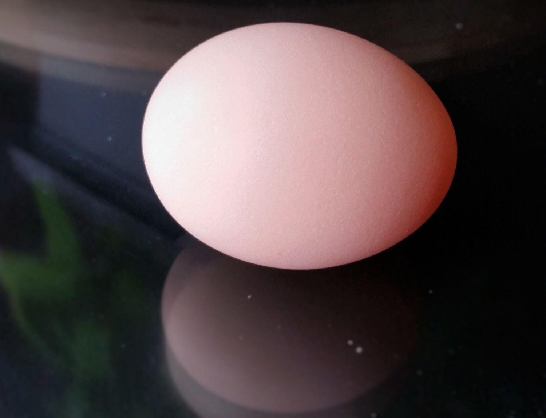 "First Egg - Buff Orpington ""Blondie"" - 28 weeks - 50.6g 10/25/15"
