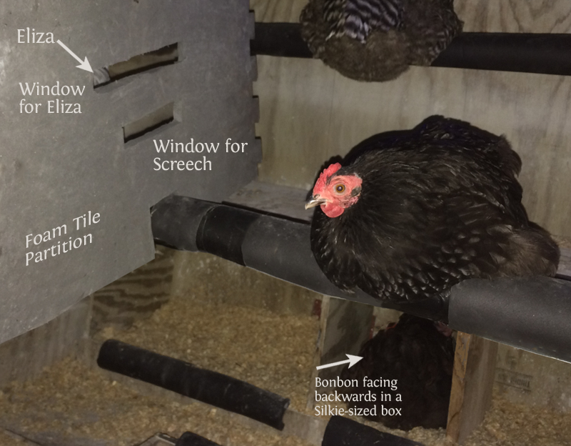 my experience with mother hens and Mother hens handle all of the hatching details from humidity to temperature and egg-turning to raising the chicks  this was my first experience with a broody molt.