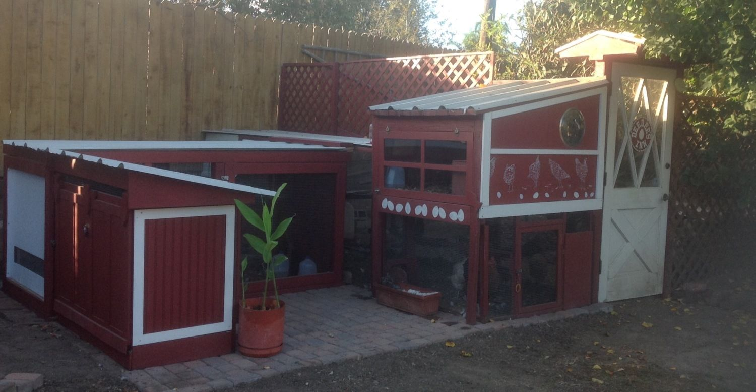Deedee's Inn today, Nov 2 2015, after a year and a half of fun construction! The five 3-mo-old chickens (four pullets and one accidental cockerel) sleep in the 2x4 coop on the left, and the four older hens sleep in the bigger 4x4 coop on the right. They share 80 sq. ft of enclosed run space plus a fenced-in chicken yard. I am curious to see if the younger ones will eventually try to move into the bigger coop with the older ones!