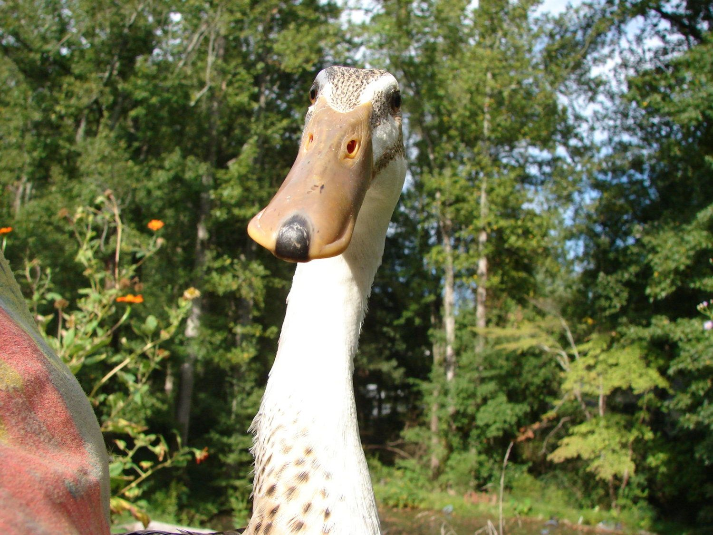 Half giraffe, half duck. 100% cute.