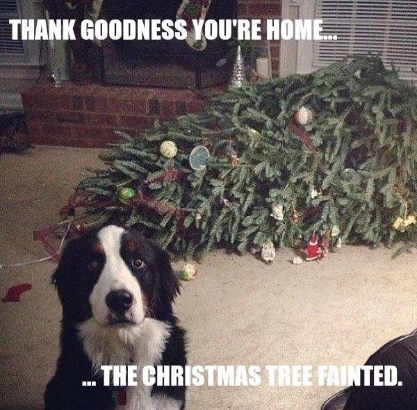 vcgbx-dog-tree-funny.jpg