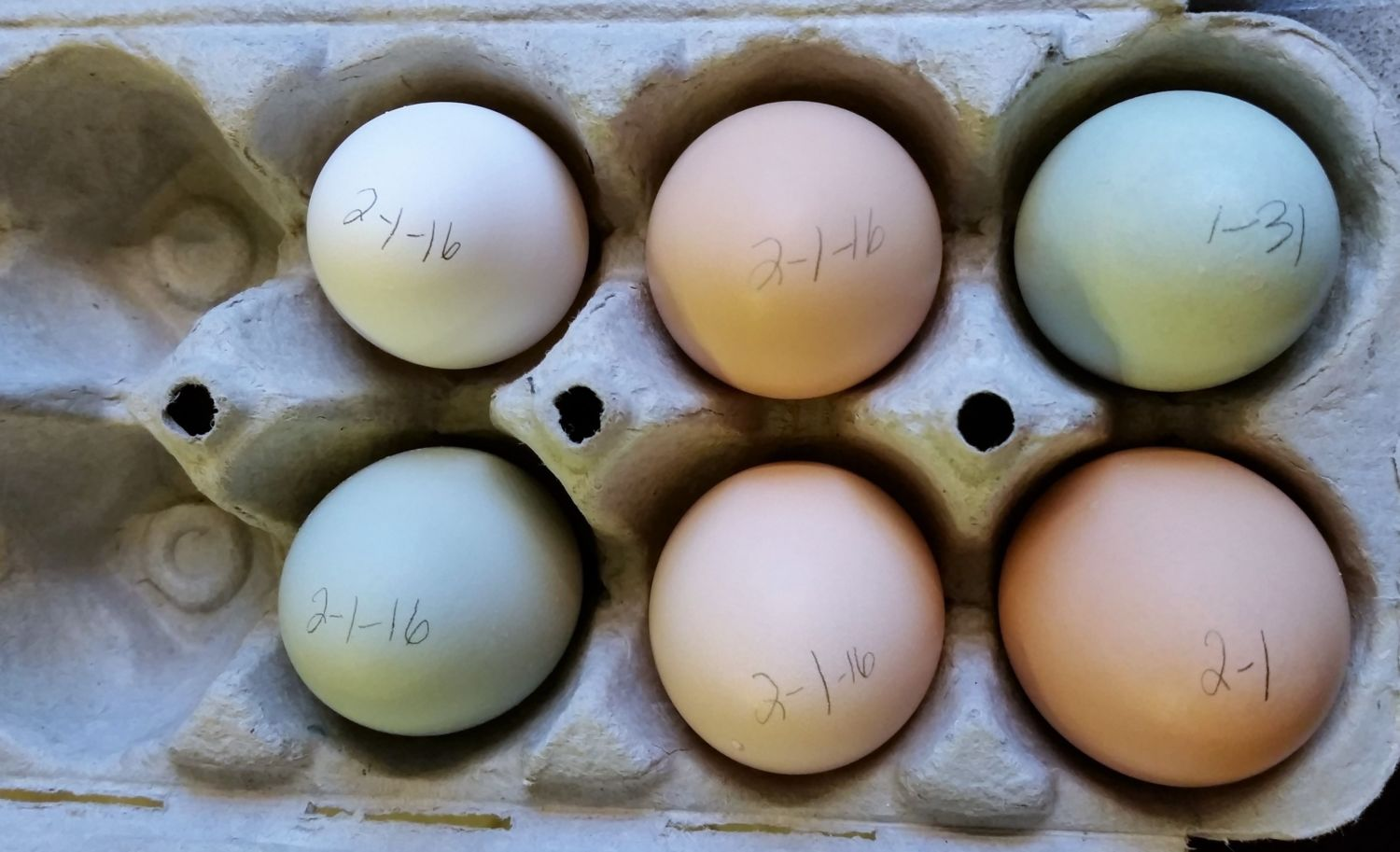 EE, Polish, Sussex, Orpington, and Australorp eggs