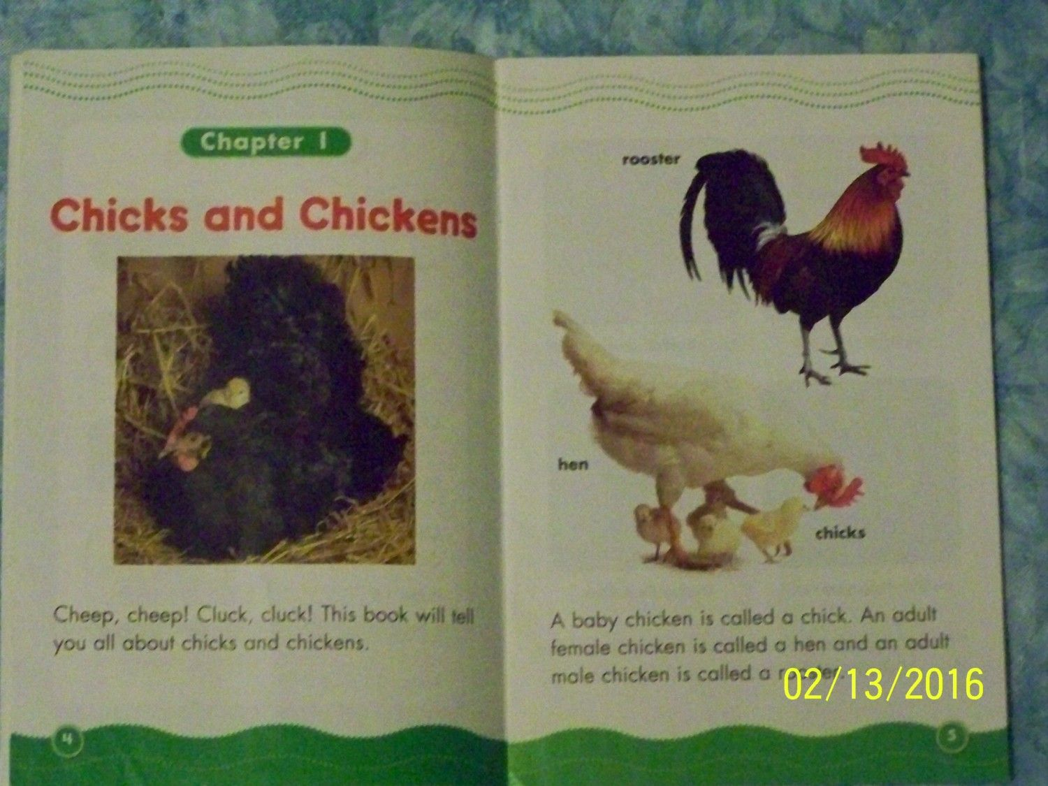 know of any good children u0027s books with chickens page 3