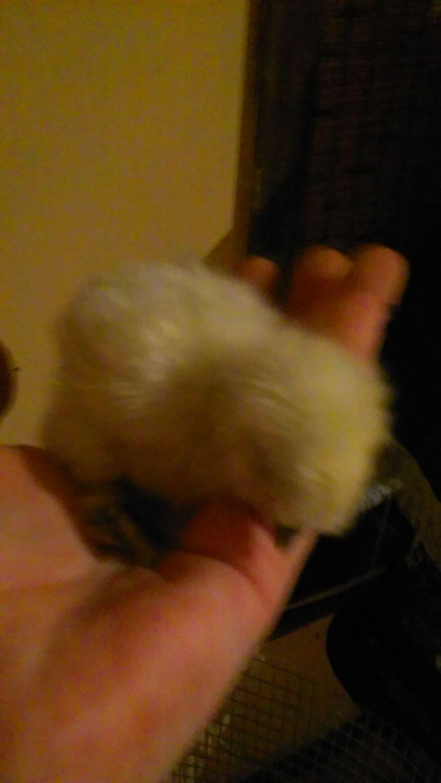 My tiny baby