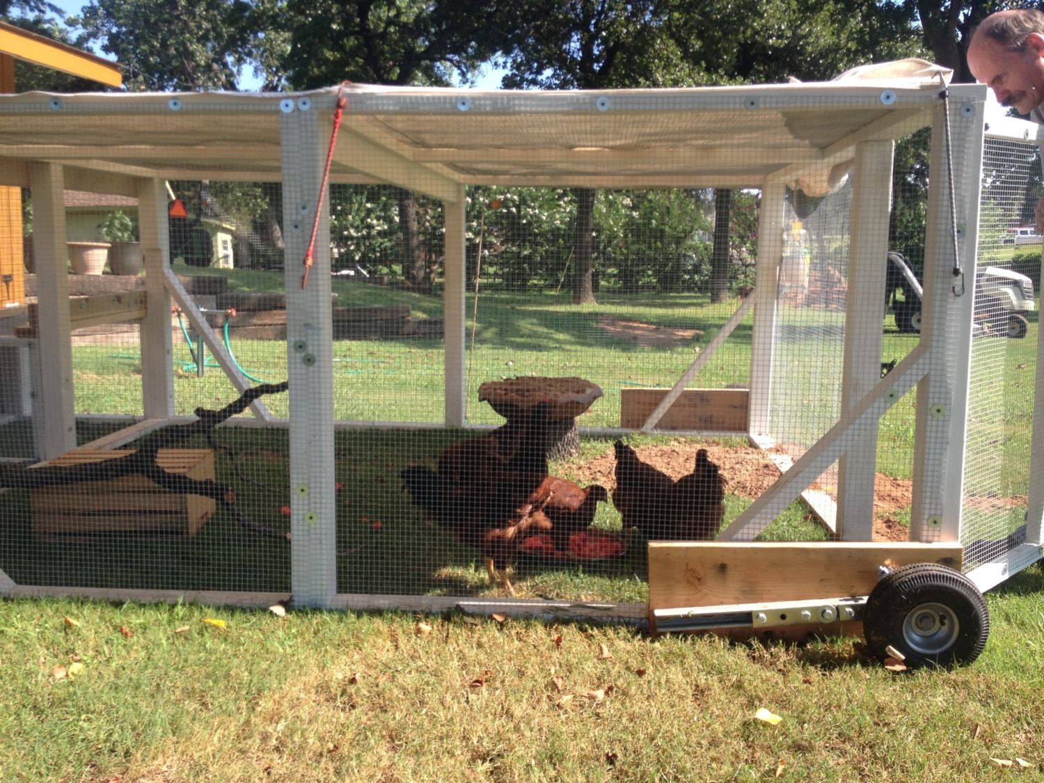 The 4' tall run (the right side) with wheels. Just have a sheet over the top of coop to keep hot sun off them, and to make it harder for the hawks to see them.