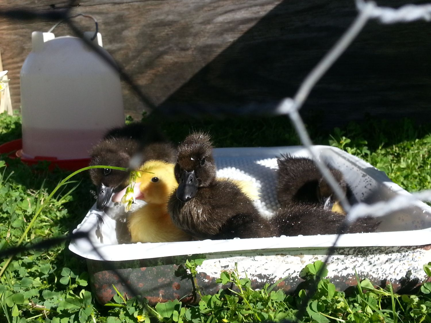 First day in the sun with their baby pool!