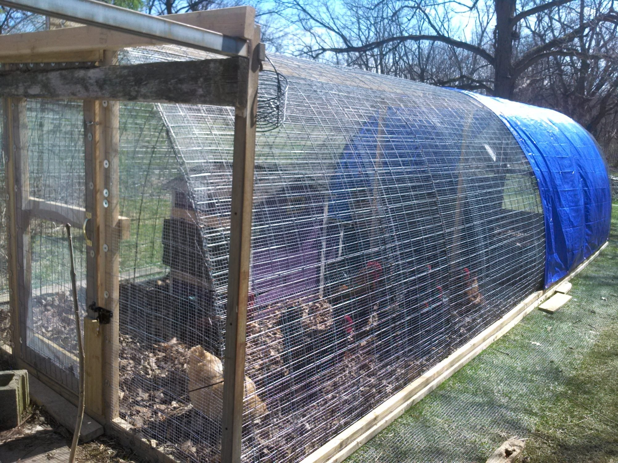 Wire meshs\' EXPENSIVE cost! | BackYard Chickens