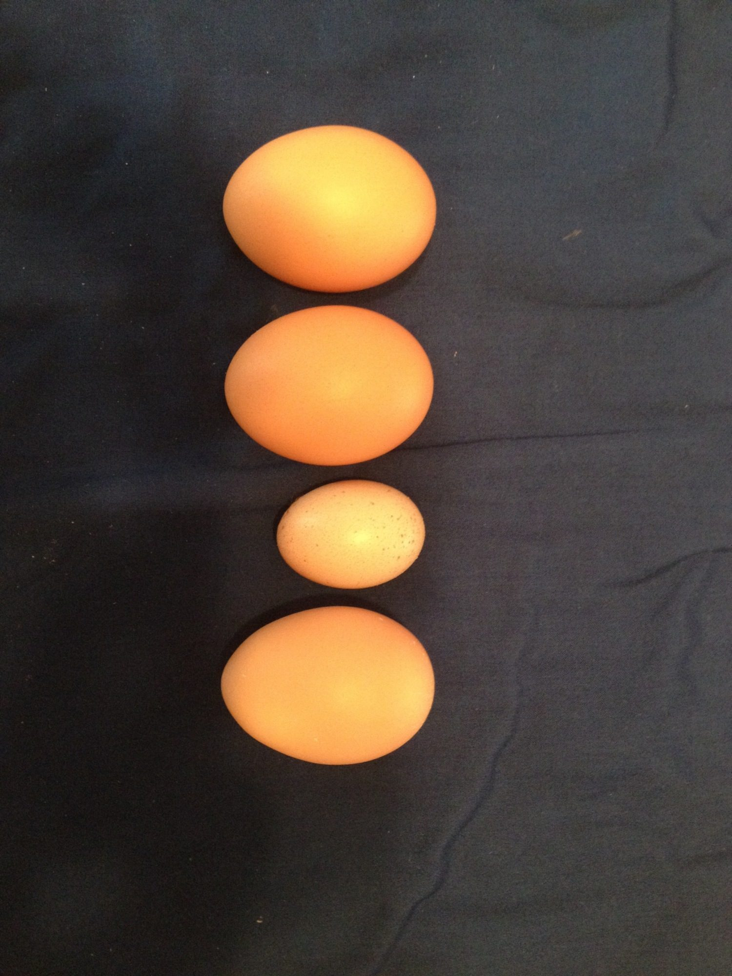 One of our hens played this tiny egg today, what a surprise!