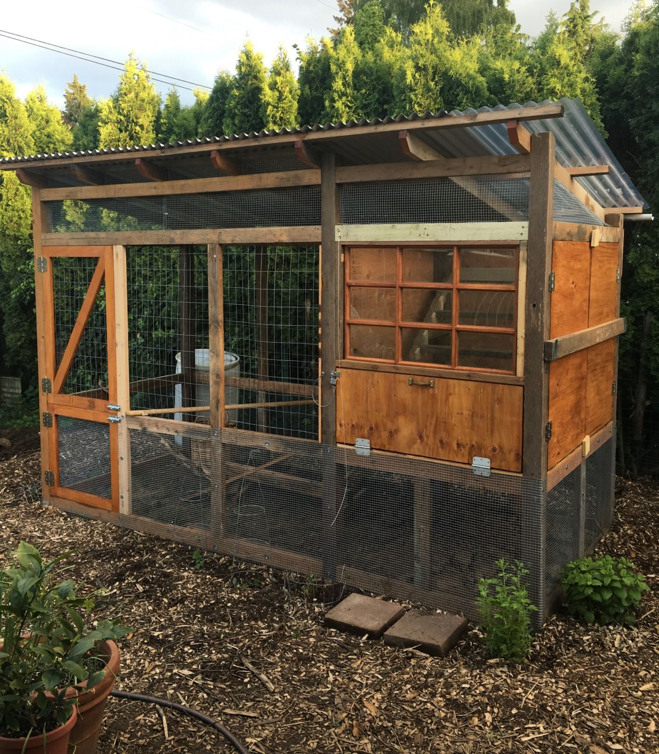 an oregon backyard coop for 5 backyard chickens