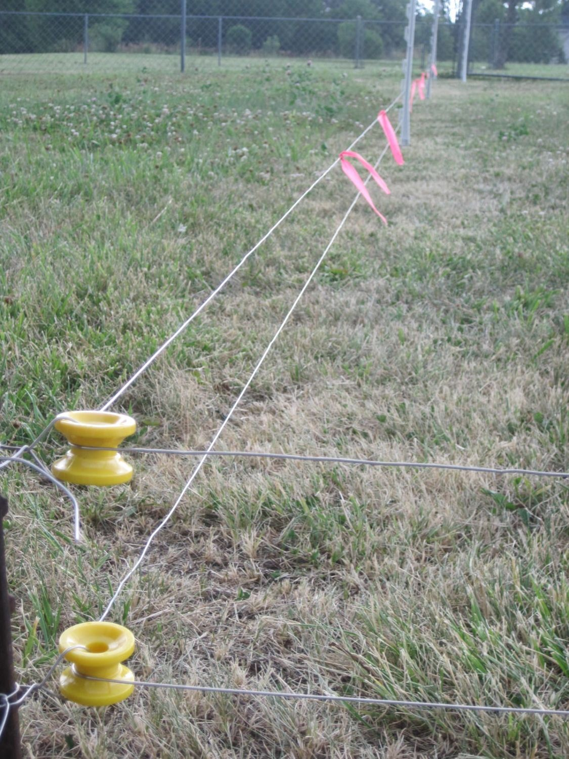 A Treatise On Electric Fences For Poultry Backyard Chickens Fence Wires Im Using 17 Gauge Aluminum Wire The Lowest Set About 5 Inches Off Ground And Is Suspended By White Plastic Step In Posts