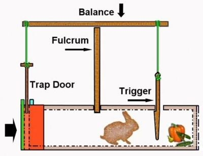 A Treatise on Traps and Trapping | BackYard Chickens