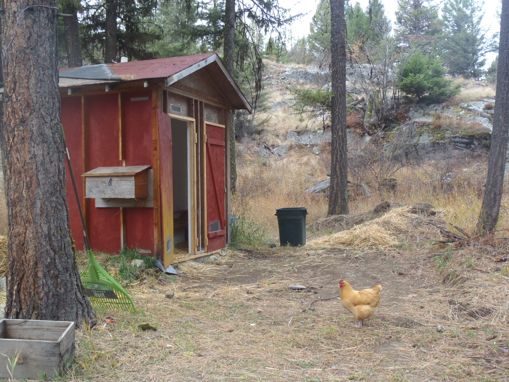 do you let your chickens free range when there is snow on the