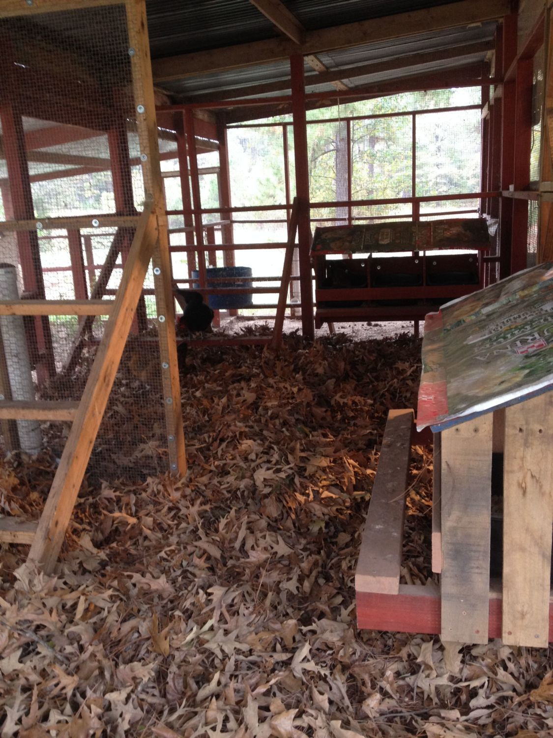 Cleaning A Dirt Floor Coop Backyard Chickens Learn How To Raise Chickens