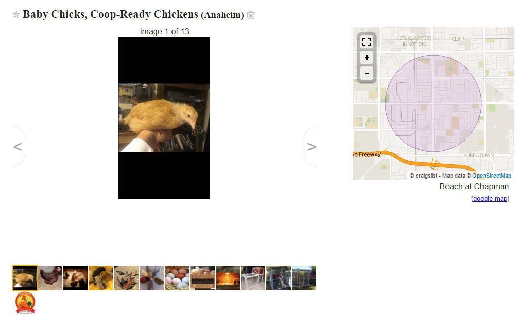 Chicken and Quail Craigslist Seller in OC? | BackYard Chickens