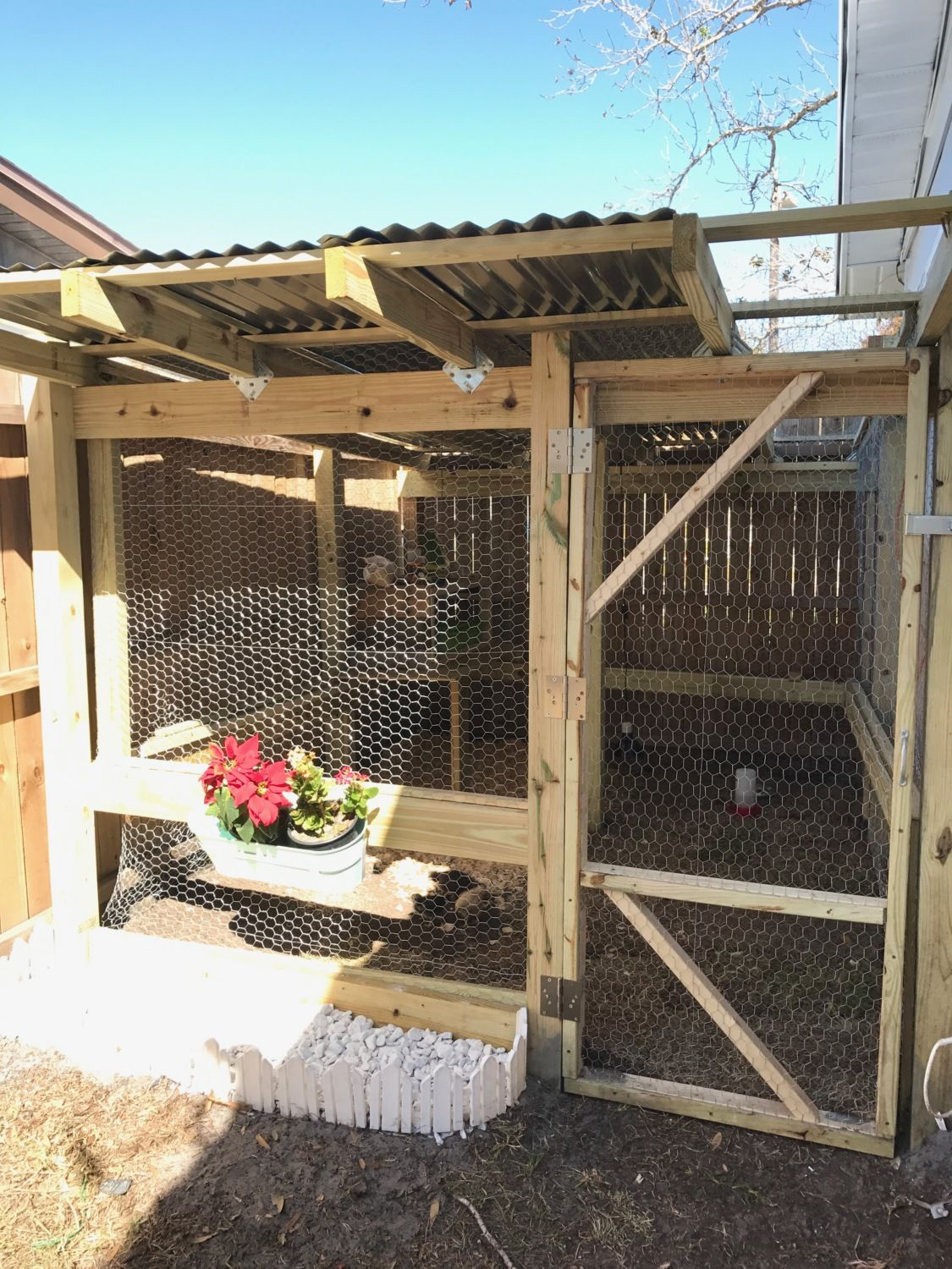 new to the chicken game help making homemade chicken feed