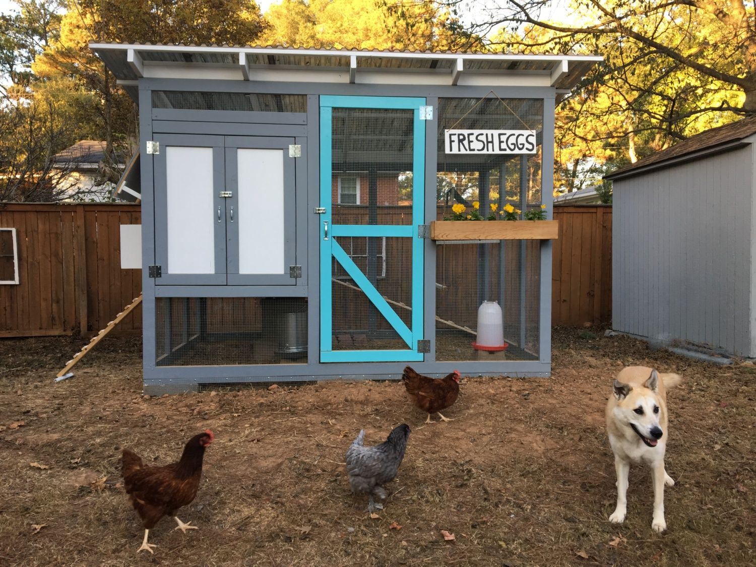 atlanta georgia urban chicken coop backyard chickens