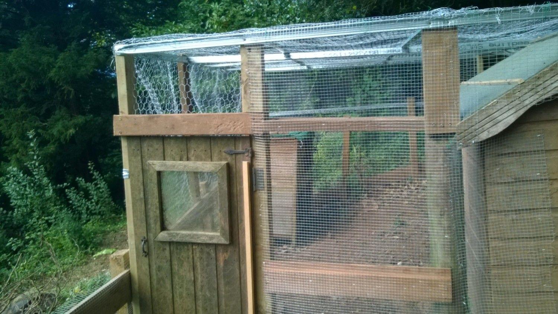 killer rats please help backyard chickens