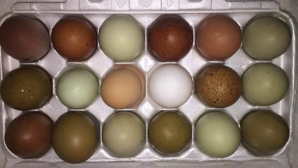 100+ Chicken Eggs Color Of Sapphire – yasminroohi