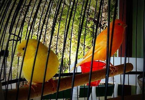 100225_birds.jpg