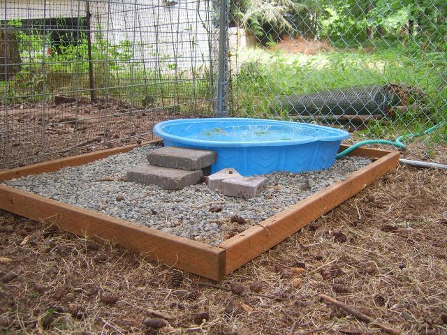 Ideas for making duck pen duck friendly backyard chickens for Keep ducks out of swimming pool