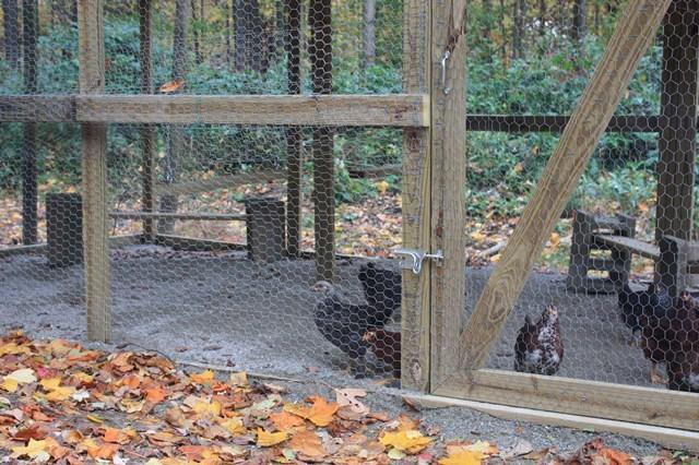 http://www.backyardchickens.com/forum/uploads/103160_img_0361.jpg
