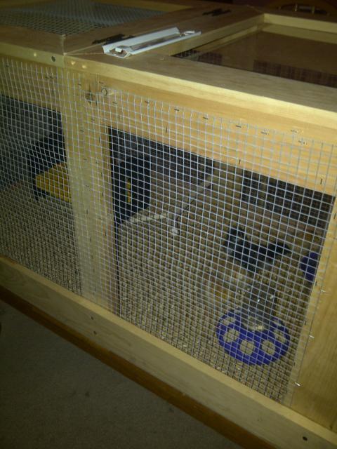 http://www.backyardchickens.com/forum/uploads/105481_blackberry_pics_049.jpg