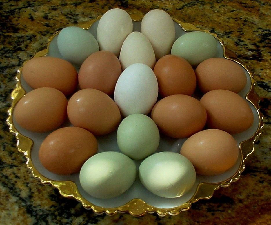 egg-colors - BackYard Chickens Community