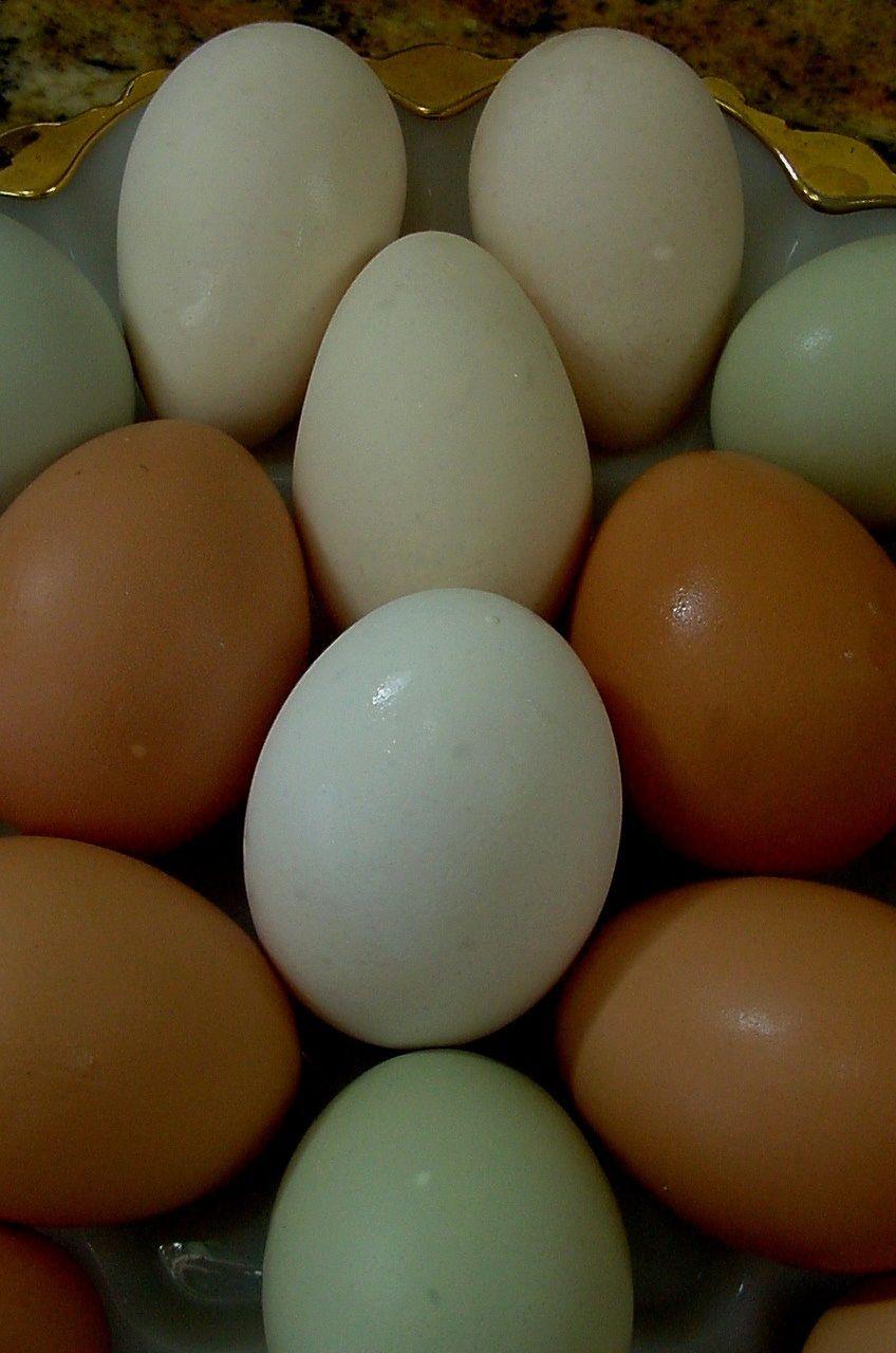 egg-colors - BackYard Chickens Community