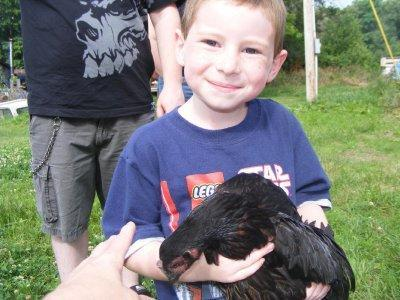 Little Joey with a hen