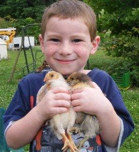 Little Joey with a couple chicks