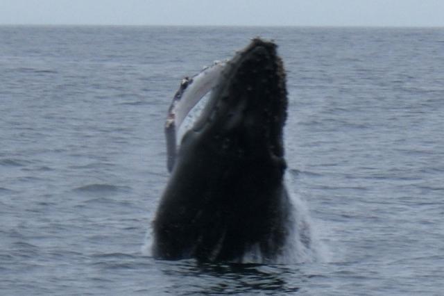 10901_whale.jpg