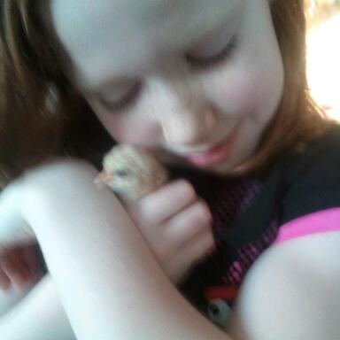 http://www.backyardchickens.com/forum/uploads/109936_2011-12-31_155835-2.jpg
