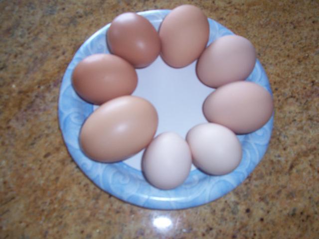 http://www.backyardchickens.com/forum/uploads/11036_001.jpg