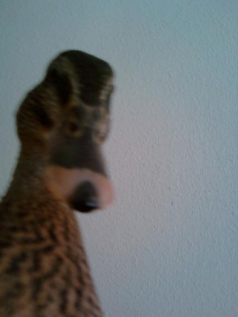 http://www.backyardchickens.com/forum/uploads/113174_curious_bug.jpg