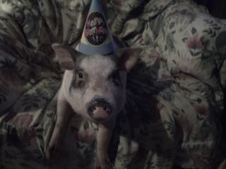 http://www.backyardchickens.com/forum/uploads/11624_petunias_party_hat0.jpg