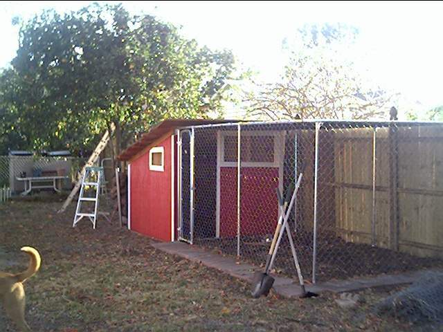 http://www.backyardchickens.com/forum/uploads/11644_feb24084.jpg